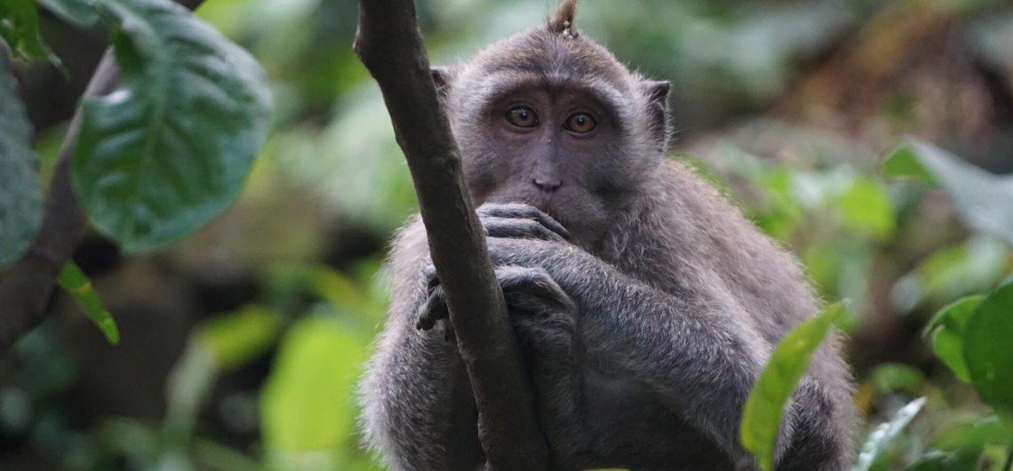 Mitai apie Bali Bezdzione