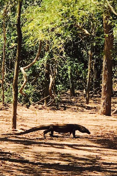 Komodo sala